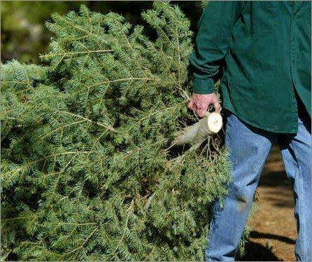 tree_recycling