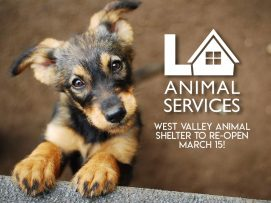 west-valley-animal-shelter-march-15-2021